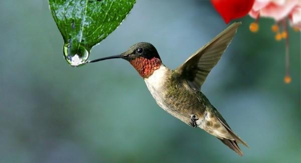 water-drop-plant-beija-flor-colibri-nature